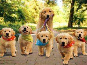 Makanan Yang Bahaya Untuk Anjing