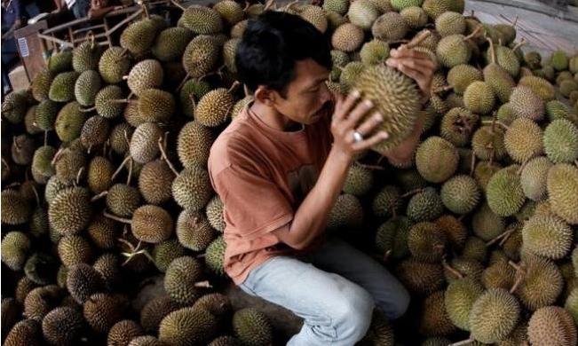 Tips Agar Anda Tidak Tertipu Buah Durian Yang Tidak Bagus