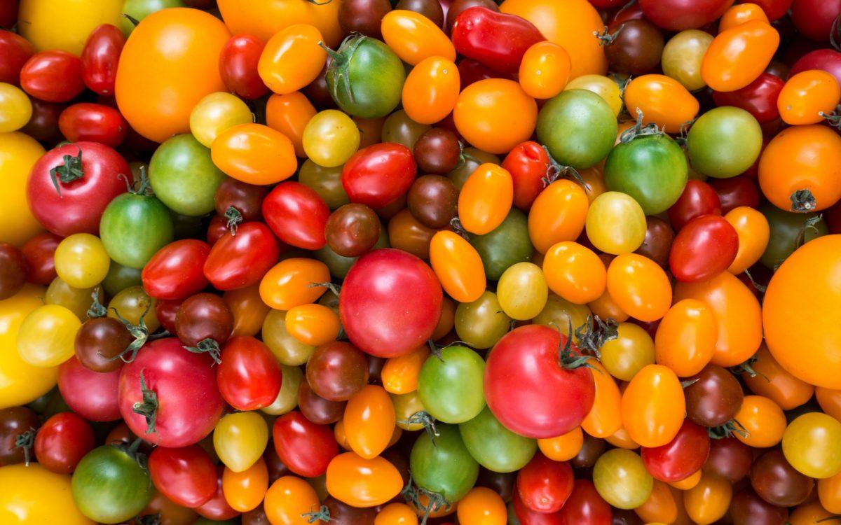 Bagaimana menurutmu Tomat jenis Buah / Sayur?